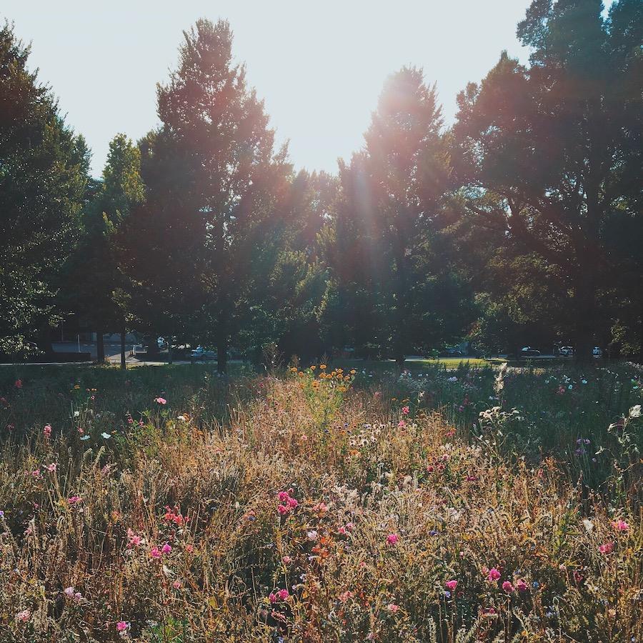 preston park wildflower meadow brighton