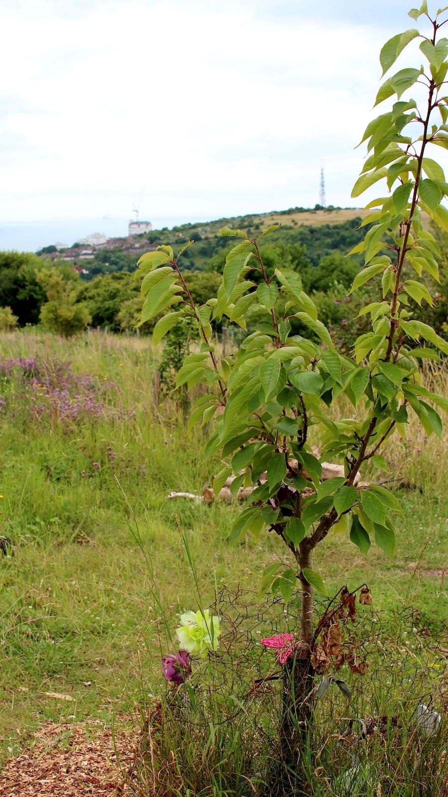 racehill orchard brighton