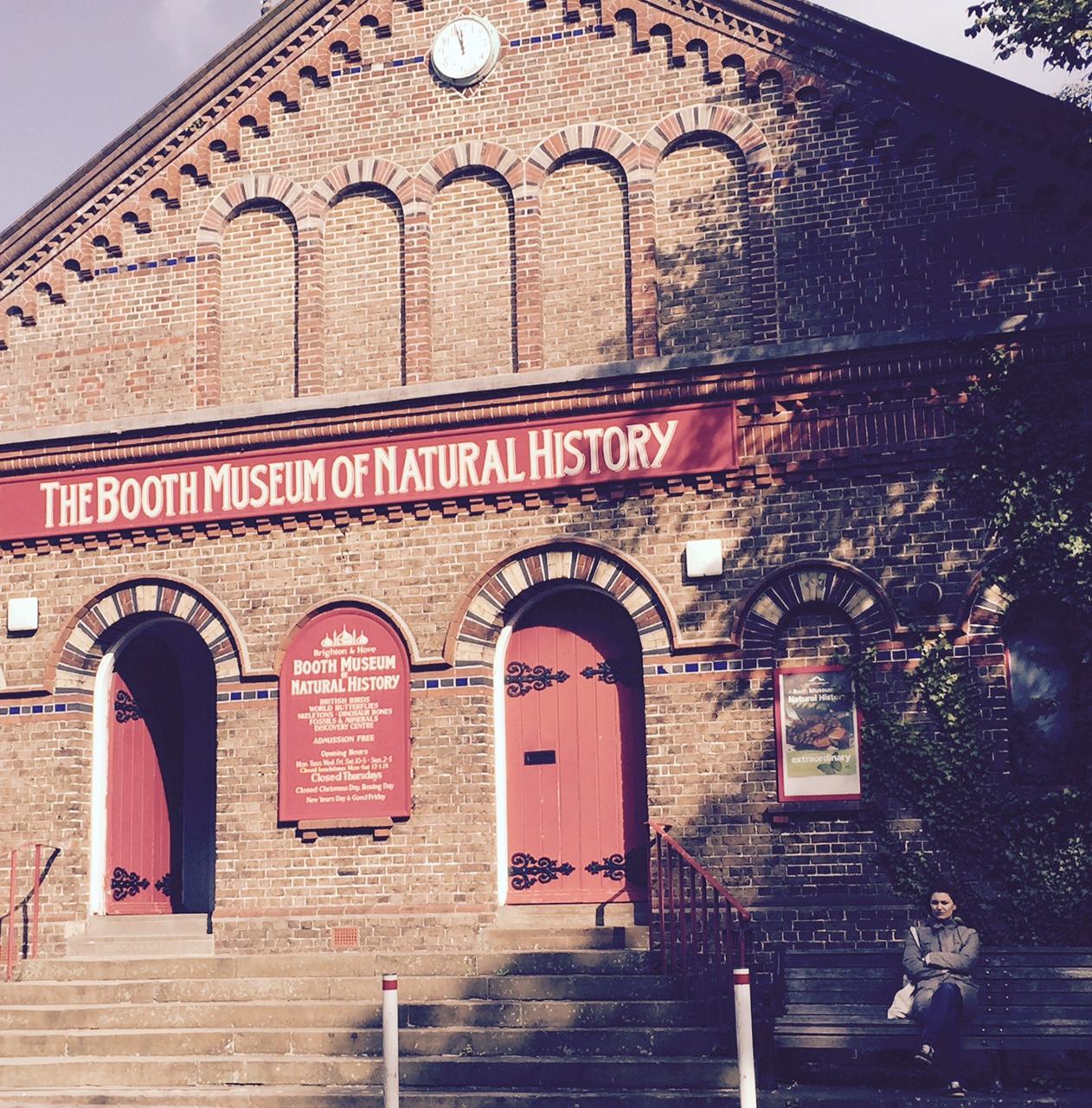 booth museum brighton